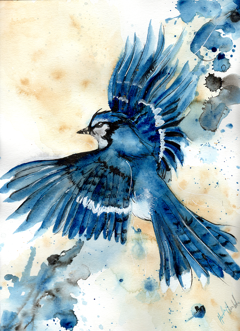 Blue Jay Watercolor and new experiences Journal Watercolors  music guitar playing blue jay spirit animal